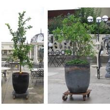 Vaso piante Vecchio crogiolo di fonderia Piccolo