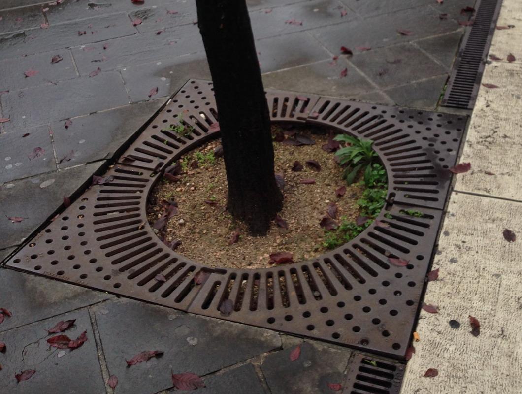 Griglia protezione aiuola alberi e piante posa fonderia for Piante da aiuola