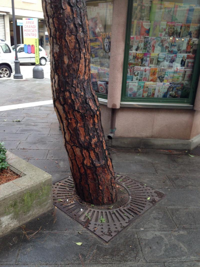 griglia protezione aiuola alberi e piante posa fonderia