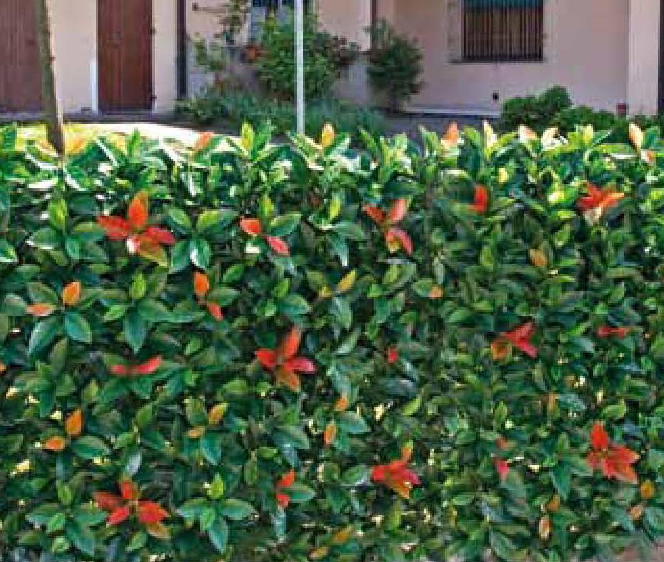 Siepe artificiale sintetica per recinzione e terrazzo for Edera artificiale per balconi
